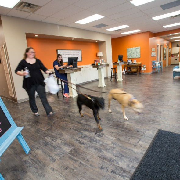 All-Star Veterinary Clinic Westfield Indiana