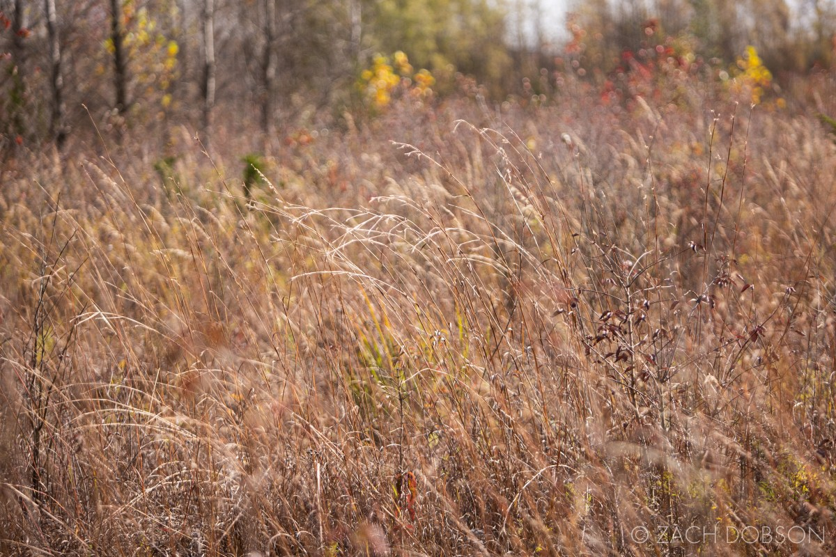 Ritchey Woods Nature Preserve in October