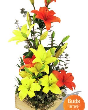 zFlowers.com for Mother's Day