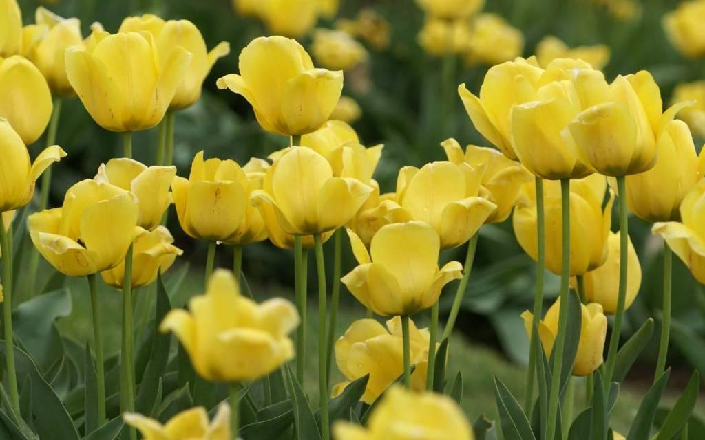 Advantage of Fresh Flowers Over Silk Flowers