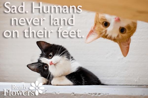 Cat humour