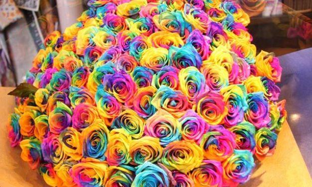 A DIY Challenge: Rainbow Roses