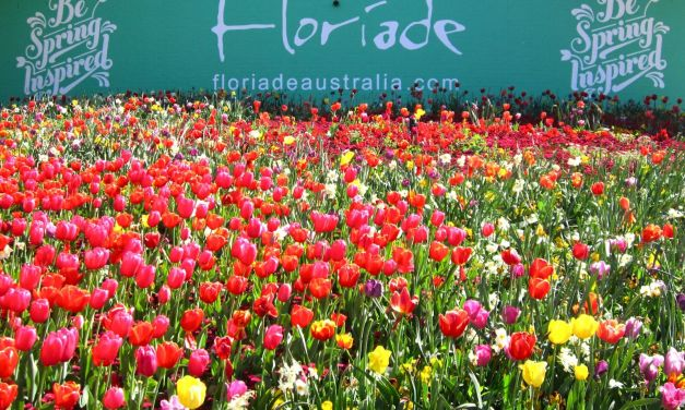 Floriade 2016: Starter Pack for First-Timers