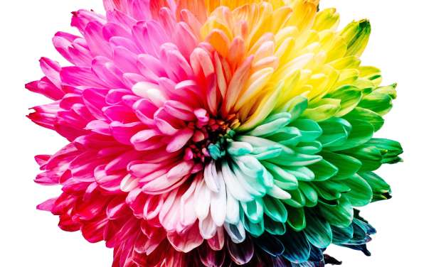 8 Captivating Colours of Love