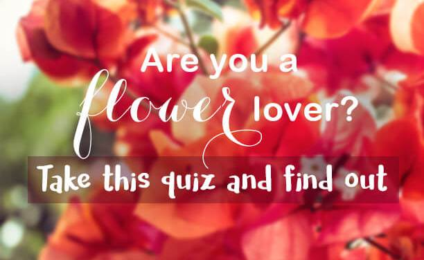 Are you a flower lover?
