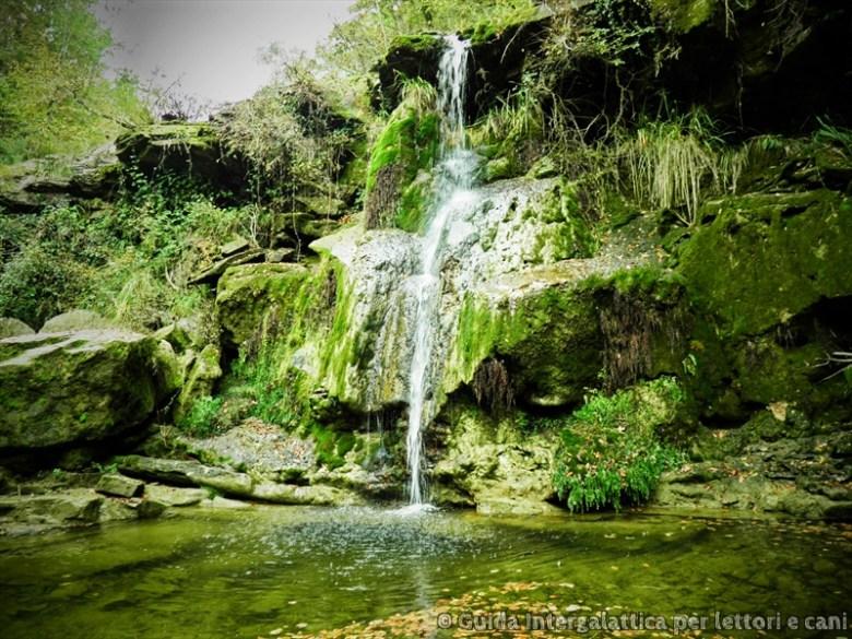 cascata - La foresta dei mille occhi ovvero Caselli e la cascata dello Sterza