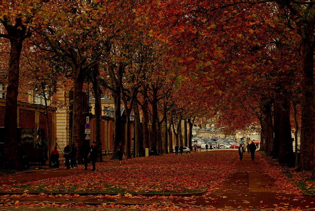 5 posti dove ammirare il foliage a Parigi