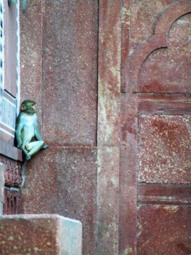 Taj Majal monkeys