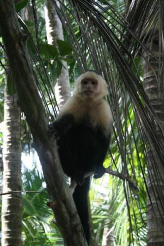 Manuel Antonio National Park & Nearby Beach