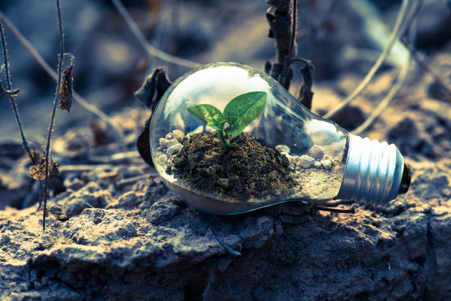 a bulb with a plant inside signifying an eco life and to save energy