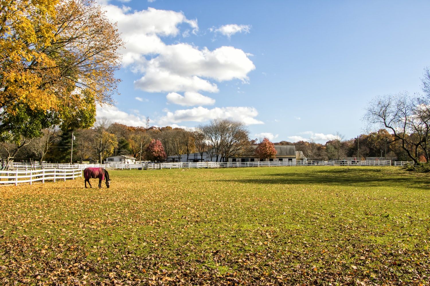 Houses for rent in NYC with a green pasture and a horse grazing