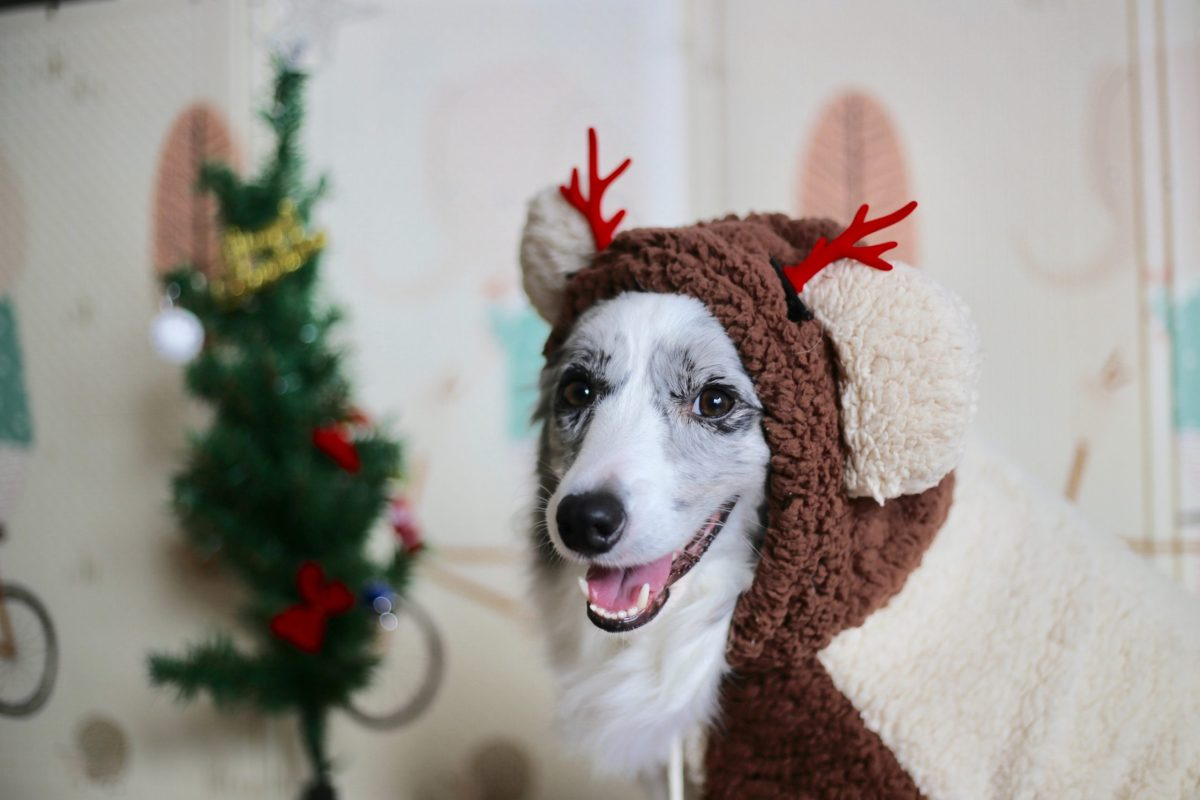 Happy dog with a reindeer hat celebrating the Christmas spirit