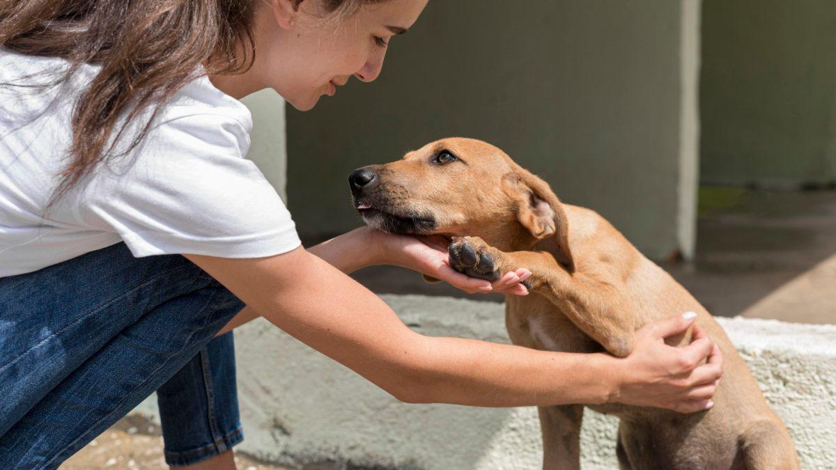 Adoptar un perro es algo de adulto responsable, ¿estás listx para esto?