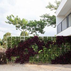 Como escolher as plantas certas para o seu jardim vertical