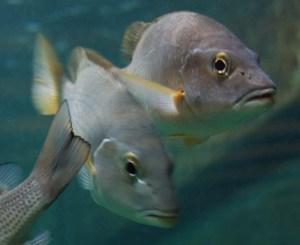 54 poissons3