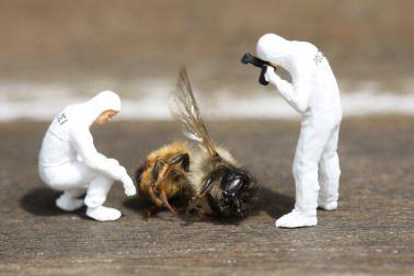Micro-fiction - meurtre d'abeille