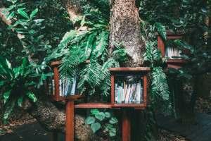LA CHAÎNE DU LIVRE - Auto-édition [3] - livres forêt