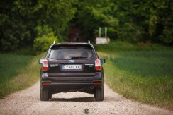 Forester 20