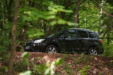 Forester 30