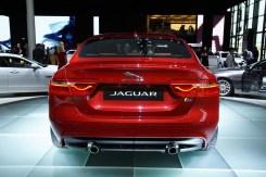 Jaguar.6