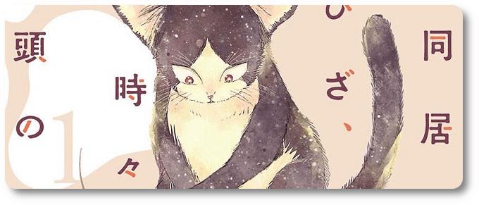 BBM lista: obras para amantes de gatos