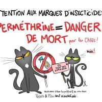 Chats et insecticides : attention !