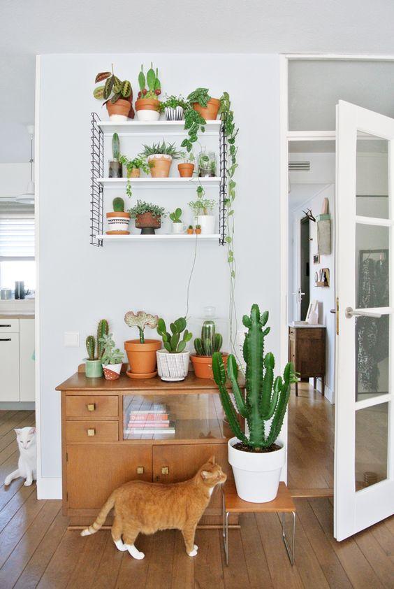 cactus_suculentas_terrarios_16