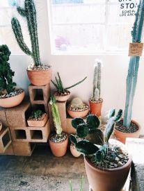 cactus_suculentas_terrarios_5