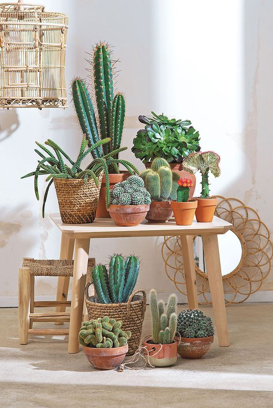 Cactus_Suculentas_1