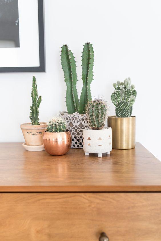 Cactus_Suculentas_4