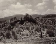 alvarez_bravo_landscape_with_grass