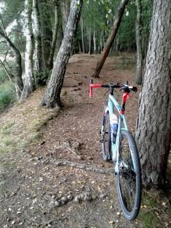 im Wald auf Crosser-Tour