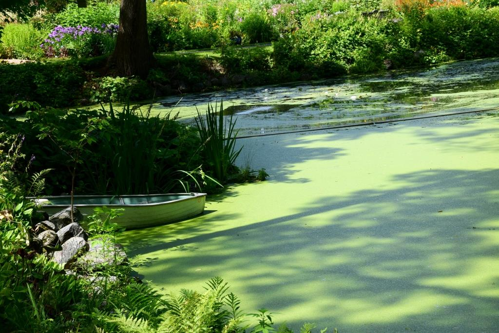 Green pond inspiration