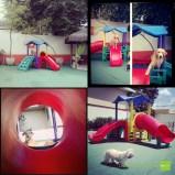 Brinquedão, o castelo dos cães