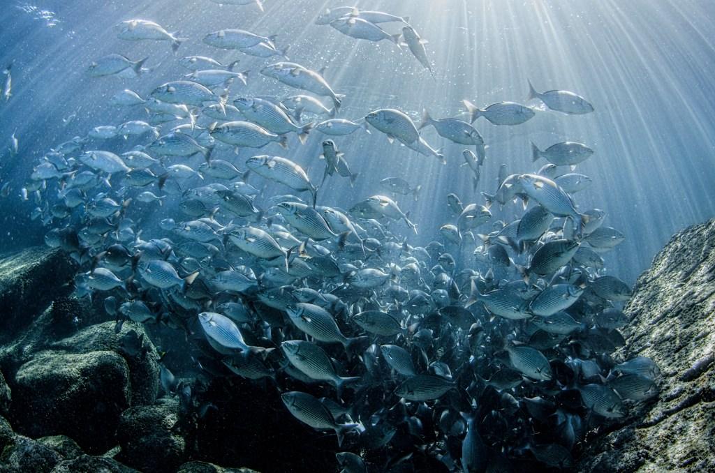 Large school of fish