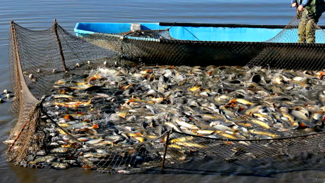 Aquicultura como alternativa para substituir a pesca extrativa