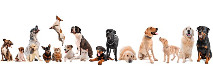 Qual o espaço ideal para cada cachorro?