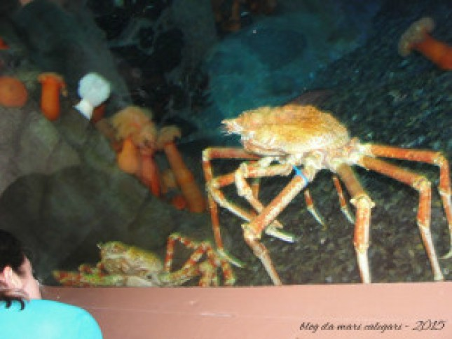 blog aquario 02 atlanta