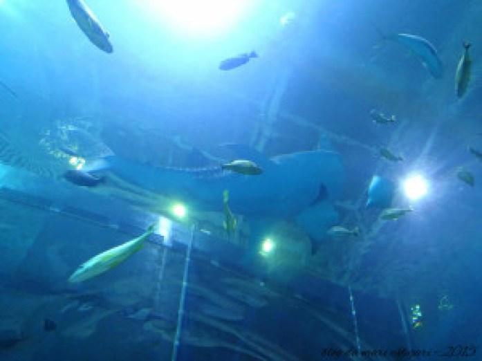 blog aquario atlanta 08