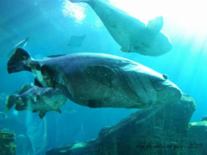 blog aquario atlanta 09