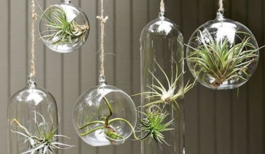 bola-vidro-suspensa-the-terrarium-inside