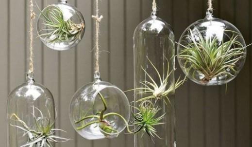 bola-vidro-suspensa-the-terrarium-inside