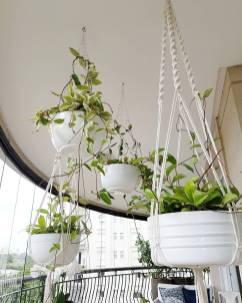 plantas-decoracao-pendentes