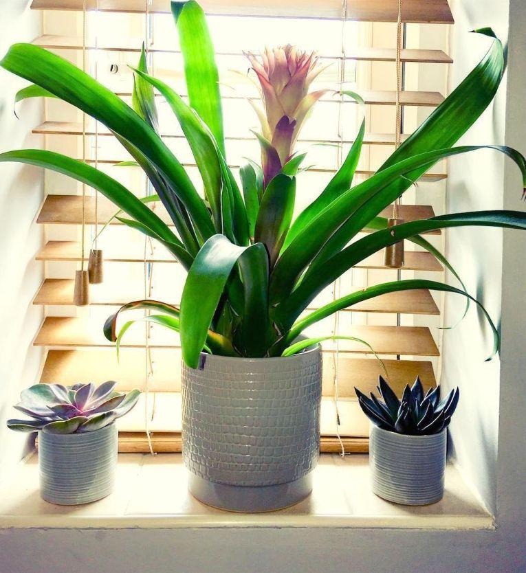 plantas-na-decoracao-12