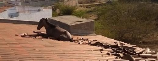 Cavalo erra caminho e vai parar no telhado de residência
