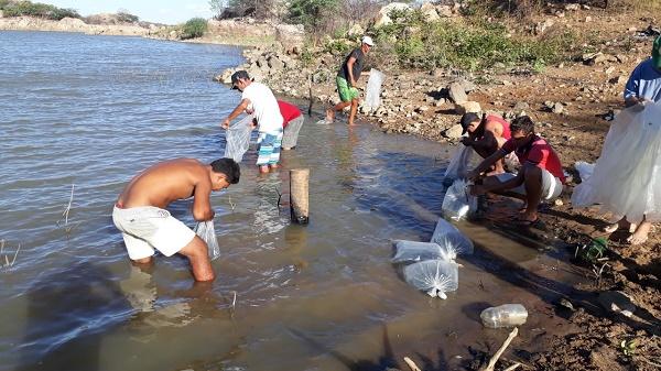 Resultado de imagem para Prefeitura distribui 80 mil alevinos de peixes em açudes públicos e comunitários