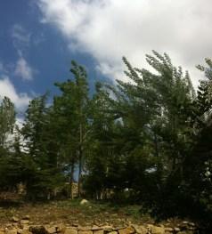 Garden - Green Area