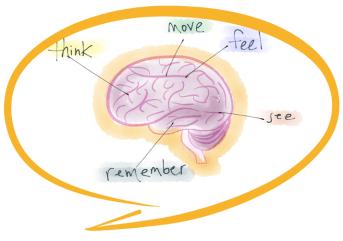cerebro neuro periodismo