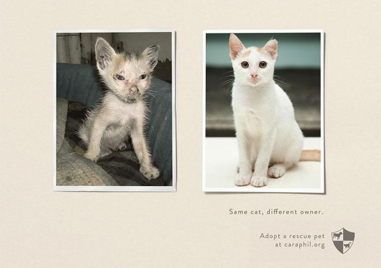 Abuso Animal y albergues: Igual mascotas, diferente propietario