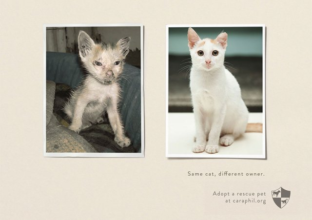 La misma mascota, un dueño diferente. Adopta una mascota rescatada